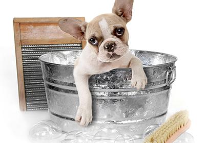 Цена за процедуру собаке среднего размера