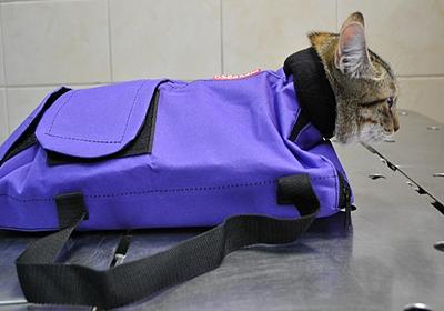 Сколько стоит кремация кошки в чебоксарах
